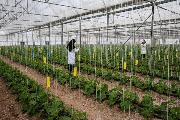 حمایت کمیسیون کشاورزی مجلس از دستاوردهای دانش بنیان